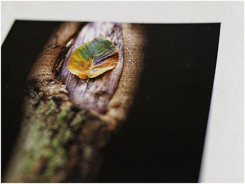 Ben Suydam Nature Photography